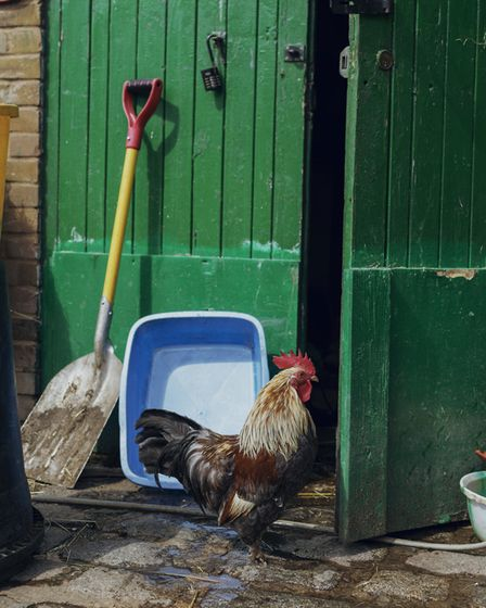 The book features words from Sonya Barber and images, like this one of Hackney City Farm, from Charl