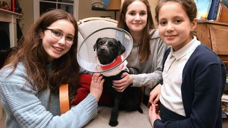 Olive, who is a patterdale terrier, back at home with the Mendick family, pictured with Matilda, Dil