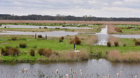 Carlton Marshes, near Lowestoft. Picture: Nick Butcher