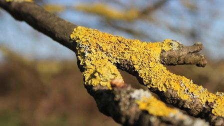 Lichens are indicators of improving air quality. Picture: City of London Corporation