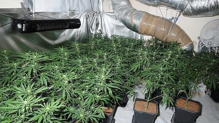 The cannabis factory discovered in Lowestoft. Picture: Suffolk Constabulary
