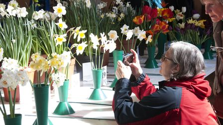 Highgate Horticultural Society Spring show 2019. Artist Christine Nicholls photographing the Daffod