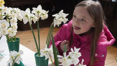 Highgate Horticultural Society Spring show 2019 8 year old Marianne Benz admiring the Daffodils