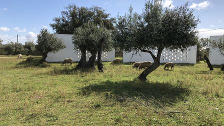 Rooms at the Tivoli Évora hotel are scattered around its grounds amongst the cork trees. Picture: Em