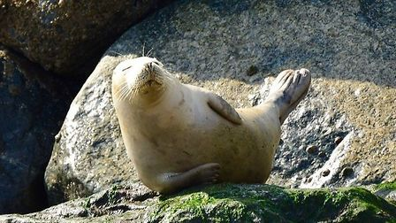This shot of a sunbathing seal has taken The Journal's Picture of the Week. Photo: Bill Hancock.