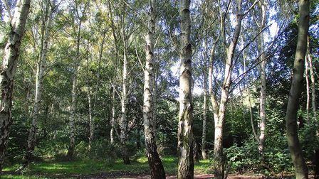 Wick Woodland, which could have been bulldozed to make way for a sports centre