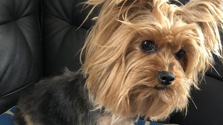 Rocky the Yorkshire Terrier belonging to the family of Crouch End cartoonist Zoom Rockman was killed