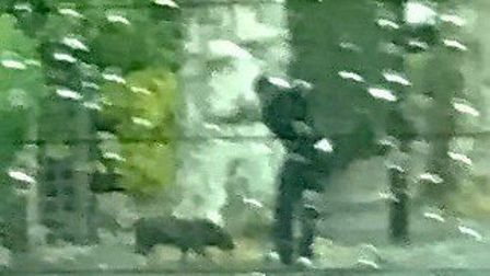 A blurry image of the dog thought to have attacked Zoom Rockman's Yorkshire Terrier. Picture: suppli