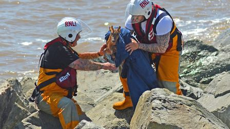 Lowestoft Lifeboat crewmen Ben Arlow and Andy Smith rescue the distressed deer. Picture: Mick Howes