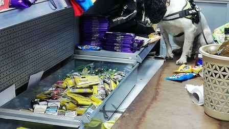 Sniffer dog Pippa with the illegal tobacco find. Picture: Hackney Council