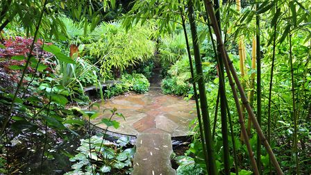 Henstead Exotic Garden is set to host its first ever wedding. Picture: Nick Butcher