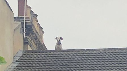 Willow on the roof. Picture: @LondonFire