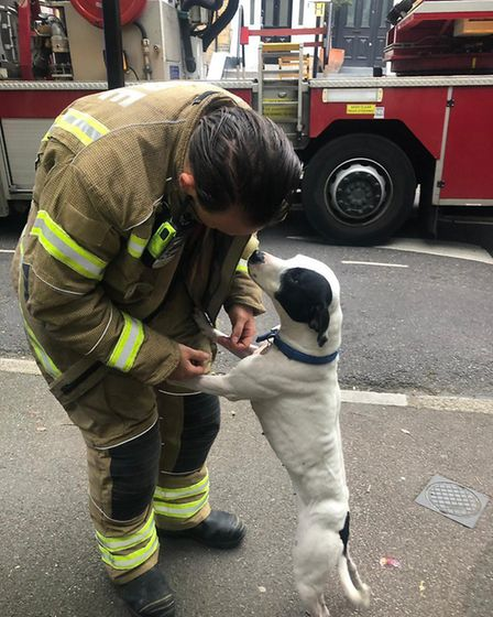 Willow after being rescued. Picture: @LondonFire