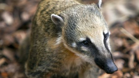 Meerkats porcupines and a Coati will all be part of the new Animal Adventure Zone at London Zoo