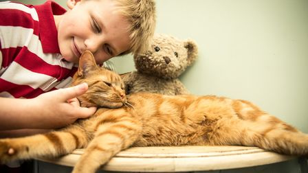 Herbie, 7, with Honey the cat. Photo: Cats Protection