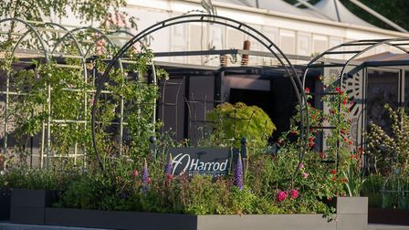 The Harrod Horticultural display at the Chelsea Flower Show. Picture: Harrod Horticultural