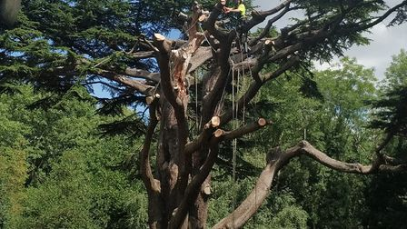 Tree surgeons at work on the Highate Cemetery Cedar of Lebanon. Picture: Highgate Cemetery