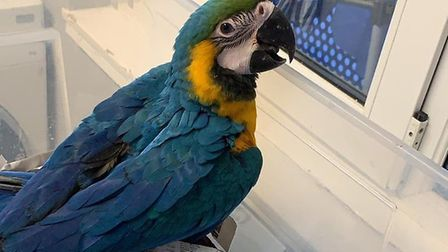 Blue the macaw.