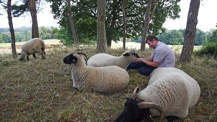 Farmer Tom Davis with sheep from Mudchute Park and Farm, after they were returned to Hampstead Heath