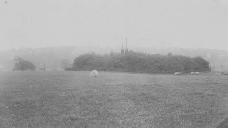 Sheep in the Tumulus field in September 1908. Picture: City of London Corporation