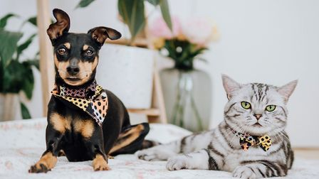 A dog in a bandana and a cat in a bow tie.