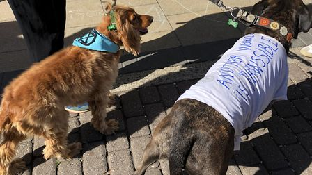 Plenty of dogs came along to the climate emergency rally outside Hackney Town Hall, including these