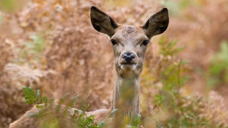 A baby deer was freed from railings. (Pic: Alamy Stock Photo)