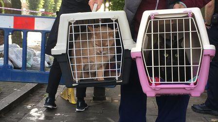 Izzy Lim's cats being rescued from her home.
