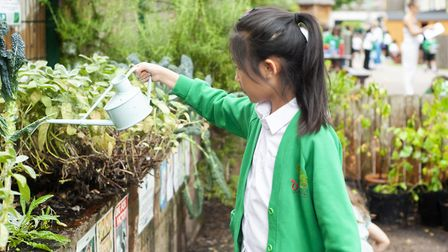Orchard Primary is the only school in Hackney to have an Eco School's green flag. Picture: James Rob