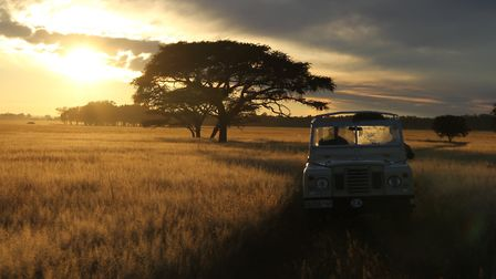 Driving in the Serengeti is also a featured film, coming to the Rio's basement on Nov 6. Picture: Su
