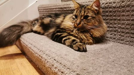 Mo, the cat that was handed back to the wrong owner by mistake. Picture: Agnes Chambre