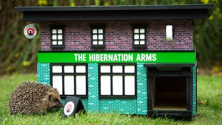 Proceeds of the huts will go to the British Hedgehog Preservation Society. Picture: Tony Kershaw/SWN