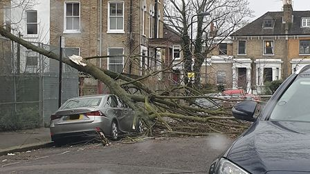 A tree was blown over in Grayling Road, Stoke Newington. Picture: Hackney Police