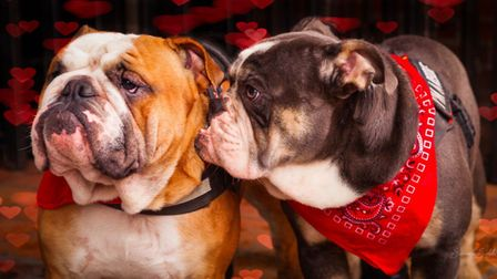 A pair of happy hounds on the 2019 All Dogs Matter Valentine's Day walk. Picture: ADM