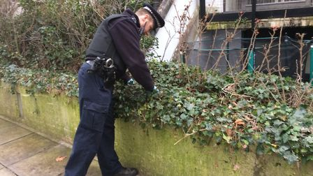 Sgt Jim Barrett inspects the undergrowth in South Hampstead. Picture: Sam Volpe