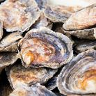 Native Oysters and culch piles in Essex