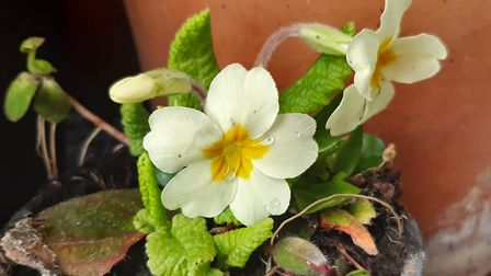 Images of spring by Highgate Horticultural Society member Laura Boothman
