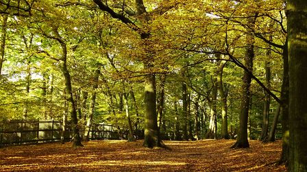 Mr Meek said residents could visit Highgate Wood for exercise. Picture: Michael Hammerson.