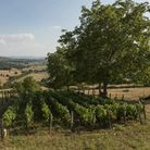 Summer in C�te Chalonnaise, at St Clement-sur-Guye. Picture by Jon Wyand