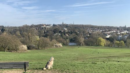 Highgate, as seen from Hampstead Heath on Sunday, March 22, 2020. Picture: André Langlois
