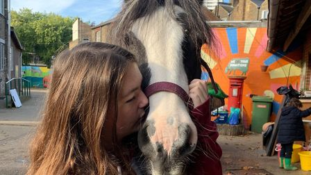 One of the horses at Kentish Town City Farm. Picture: KTCF