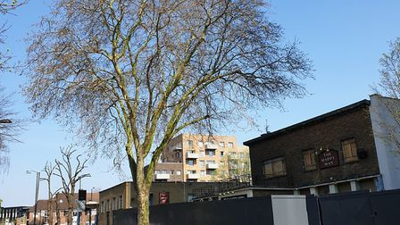 Woodberry Down Estate tree. Picture: Geoff Bell
