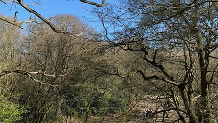 Hampstead Heath in the spring of 2020. Picture: André Langlois