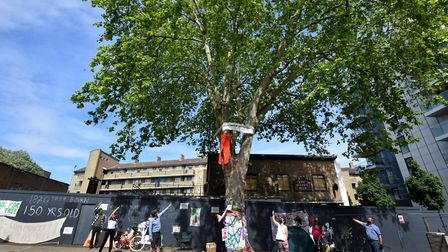 Campaigners hoping to save the 150 year old London Plane tree that stands outside the former Happy M