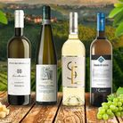 'If you are yet to try little-known Italian wine made from indigenous grape varieties saved from obs