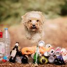 Ida the cavapoo who has taken on the brave task of clearing rubbish across the 196-acre Alexandra Pa