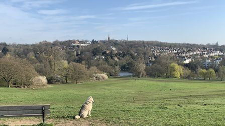 Highgate, as seen from Hampstead Heath. Picture: Andr� Langlois
