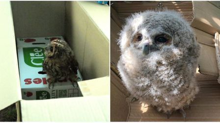 Ollie when he was found in Waterlow Park (right) and when he was freed weeks later (left). Picture: