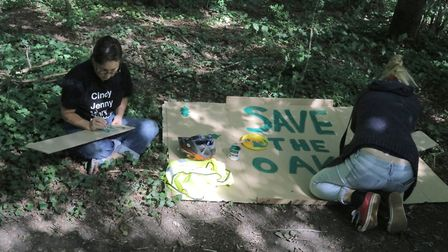 Queens Wood, London - action to prevent oak felling. Picture: Julian Glaser