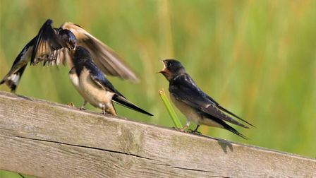 This beautiful photograph depicting a swallow feeding her young has won The Journal's Picture of the